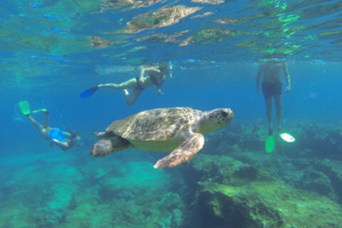 snorkelling-with-turtles